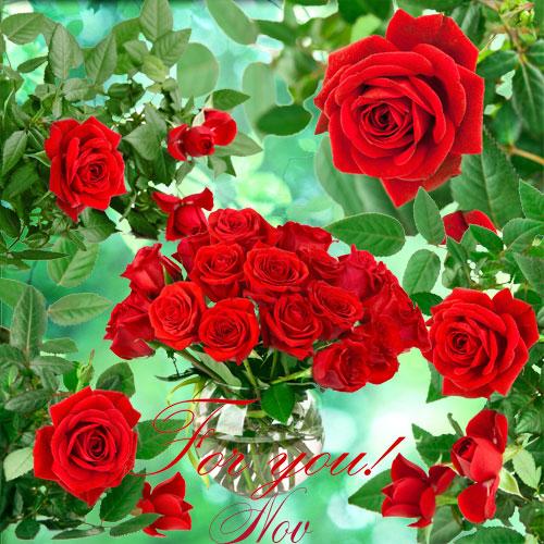 Клипарт очень красивые красные розы