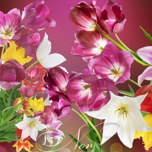 Клипарт весенние цветы на прозрачном