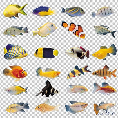 Подводный мир рыбы на прозрачном