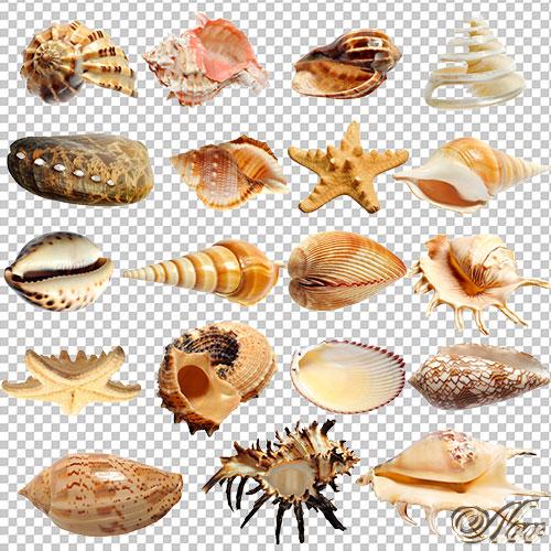 Разнообразных форм на прозрачном фоне