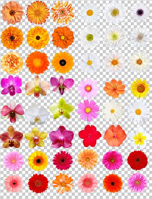Клипарт для Фотошопа - Летние цветочки ...: nov-designs.ru/cliparts-for-photoshop/cliparts-psd-png-for...